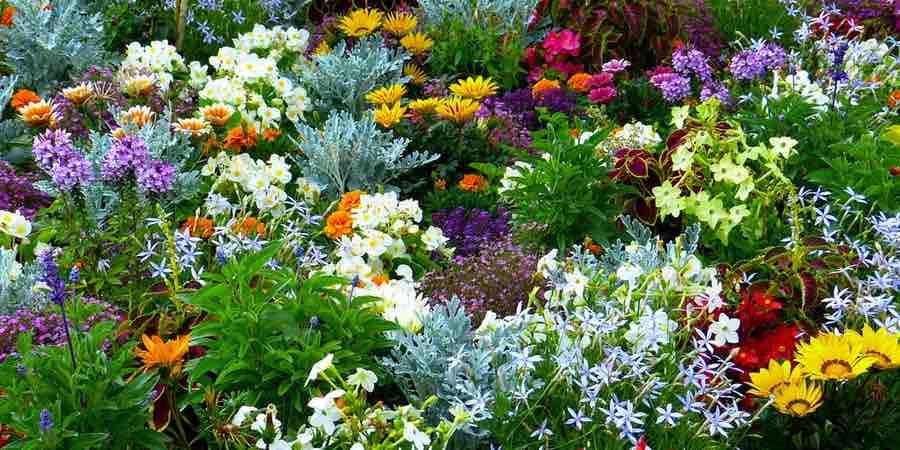 Plantación de flores en el jardín